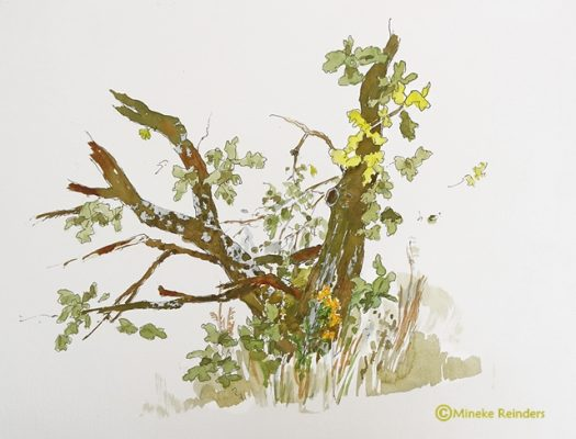 art-minekereinders-ink-watercolor-stukje-eikenboom-partial-oak-tree