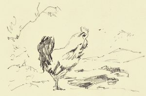 Sketch rooster