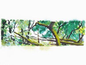Woods 17 - 110621-minekereinders-watercolor