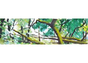 Woods 17 - 110621-minekereinders-watercolor-cr